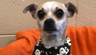ADOPT A PET from Galveston County Animal Resource Center